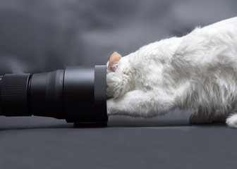 White cat trying to get into a photographic lens