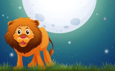 Wild lion in the field at night