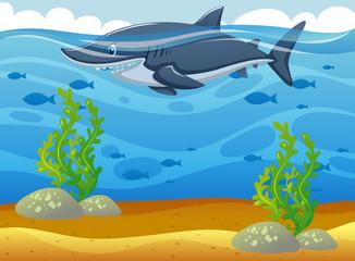 Wild shark swimming under the ocean