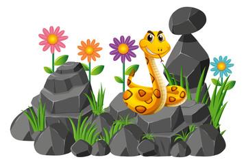 Wild snake on the rocks