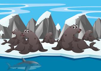 Seals and shark at arctic land