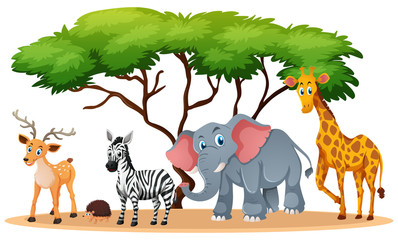 Animals in savanna field