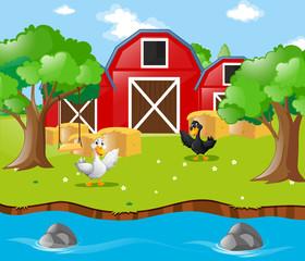 Two ducks in the farm