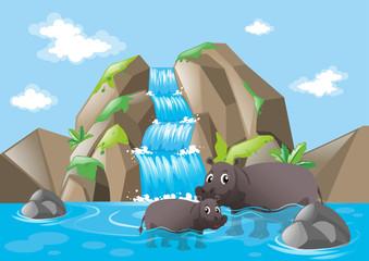 Two hippopotamuses in the waterfall