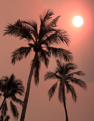 Dramatic sunset sky with silhouette coconut tree.