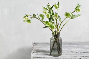 Bouquet of spring hellebore flowers in a vase. Spring floral still life with helleborus flowers. Home natural decoration.