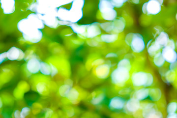 Green leaf blurred background with bokeh