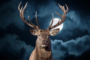 Fototapeta male red Deer portrait looking at you on full moon black background