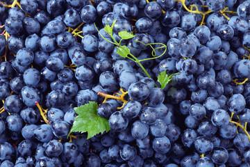 Fototapete - Grape background. Dark grape. Blue grape. Wine grape.