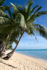 Tropical sand beach with coconut trees at the morning.