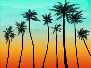 Summer Plam Sunset