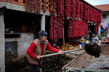 A woman works as bunches of paprika hang on the wall of a house to dry in the village of Donja Lakosnica