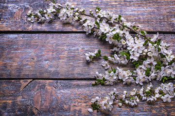 Cherry  branch blossoms  on a wooden background. selective focus