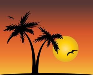 tramonto con palme e gabbiani illustrazione  vettoriale