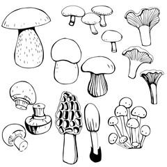 Hand drawn Mushrooms. Vector illustration.