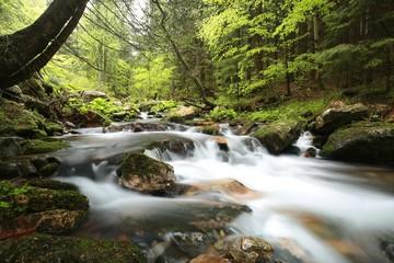 Stream flows through the spring forest