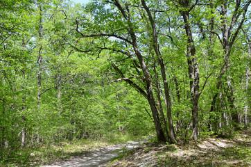 Крым, лес на склоне горы Мангуп весной