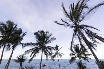 View with coconut trees at the edge of the sea