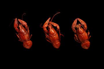 Three boiled crayfishes isolated on black