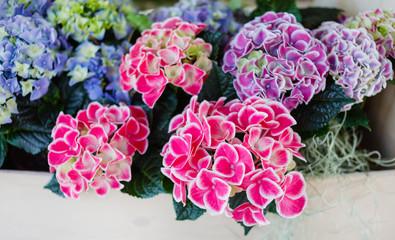 Deurstickers Hydrangea hydrangea flowers