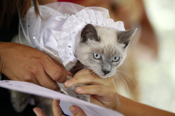 A cat wearing a bridal veil makes a paw print on a symbolic pets wedding certificate during Valentine's Day celebrations organized by a local municipality in Lima