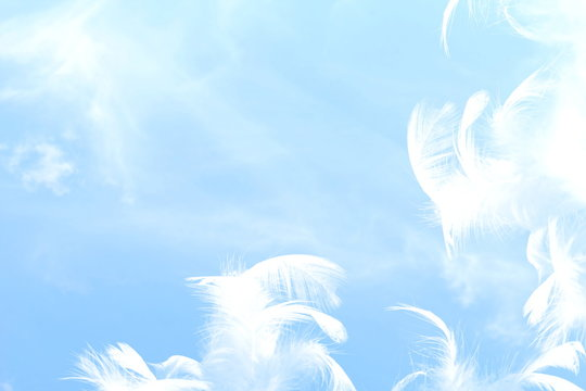 peaceful freedom or dream related concept background