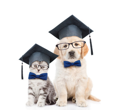 Kitten and Golden retriever puppy with black graduation hats and eyeglasses sitting together. isolated on white background