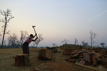 A woman chops fire wood with an axe at a logging camp in Pinlebu township, Sagaing division in northern Myanmar