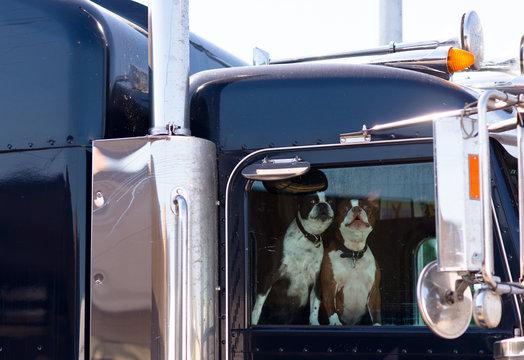 dogs man best friends
