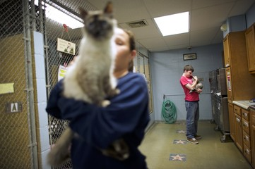 Volunteer Alex Keefe (background) and employee Michele Karkoska (foreground) hold cats at the Berks County Animal Rescue League in Birdsboro