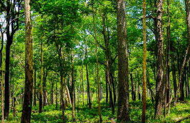 Forest and horticulture in Huai Kha Khang National Park at Uthai Thani ,Thailand. (Natural heritage)