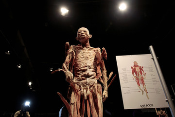 """A plastinated human body, part of """"The Human Body"""" exhibition, is seen during a media tour in Managua"""