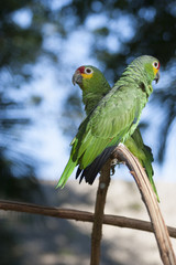 Green parrot on a tree and bokeh