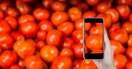 Taking picture of tomatoes through smart phone