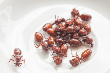 subterranean ants roast is clean food in local cuisine of Thai, Northern style food, Lanna style food