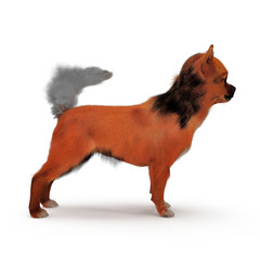 adult chihuahua on white. Side view. 3D illustration