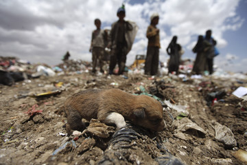 A puppy is seen at a garbage disposal site near Sanaa