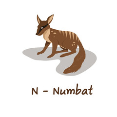 Isolated animal alphabet for the kids, N for Numbat