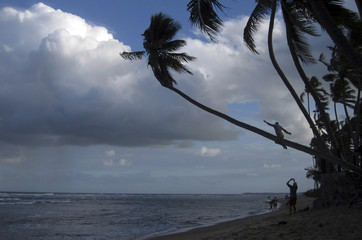 A man poses for a picture after climbing onto a palm tree on the beach of Praia do Forte, north of Salvador