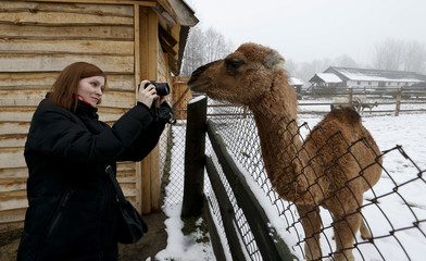 A woman takes a photo with a camel in a zoo at a private farm in Girsk