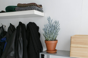 a plant in a pot next to a wardrobe