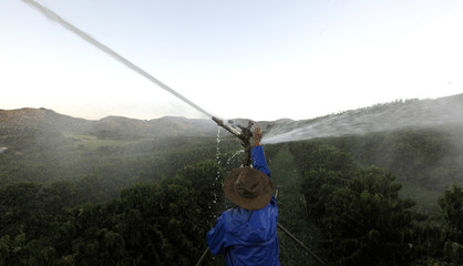 Brazilian coffee producer Maercio Diogo adjusts an irrigation system in his farm in Santo Antonio do Jardim