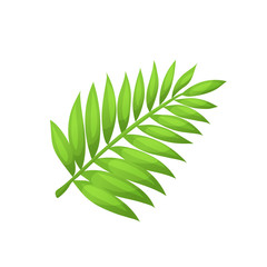 Bright cartoon palm  leaf icon. Palm branch symbol isolated on white background. Vector illustration.