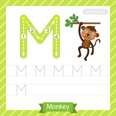 Letter M uppercase tracing practice worksheet with monkey for kids learning to write. Vector Illustration.