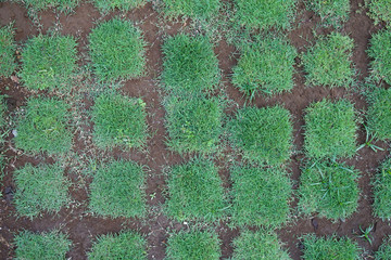 Natural green grass block planted on a garden with space