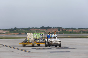 A cage holding a giant panda from China arrives at the MASkargo Complex in Sepang