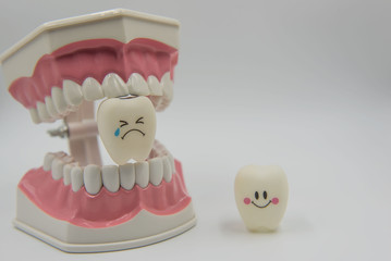 Model Cute toys teeth in dentistry on a white background.