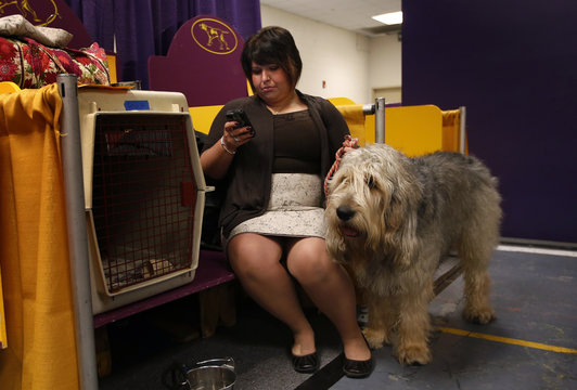 Dui, an Otterhound from Chicago, stands next to his owner Kallie Gonzalez in the benching area prior to the first night of Group judging during the 137th Westminster Kennel Club Dog Show in New York
