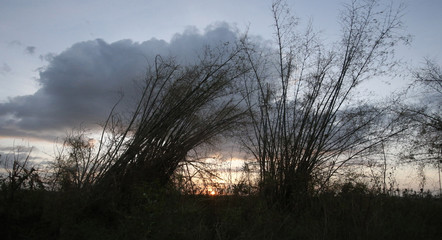 Damaged bamboo trees are pictured during sunset in the aftermath of Super Typhoon Haiyan that hit Bantayan