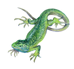 Watercolor single lizard animal isolated on a white background illustration.